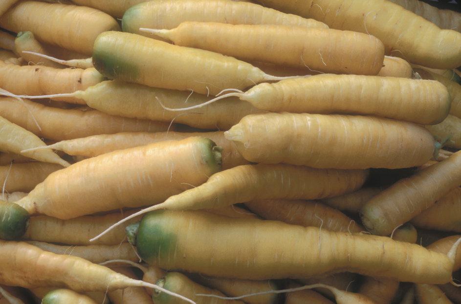Zanahoria Blanca Blanca Dekuttingen Asociacion Kokopelli Muchas gracias por registrarte en kiwilimón. zanahoria blanca blanca dekuttingen